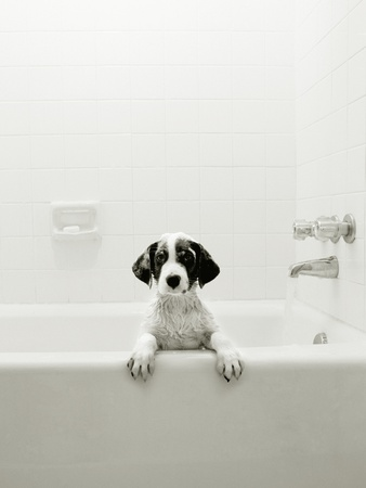 Puppy in a Bathtub Stretched Canvas Print
