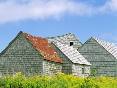 Row of Old Shingle Barns in Field Stretched Canvas Print