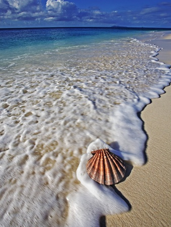 Scallop Shell in the Surf Stretched Canvas Print