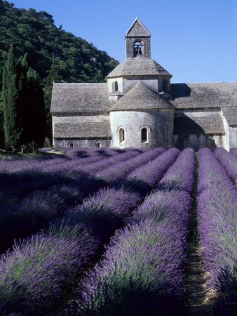 Abbey and Lavender Fields Stretched Canvas Print
