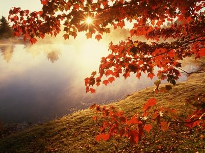 Sunrise Through Autumn Leaves Stretched Canvas Print