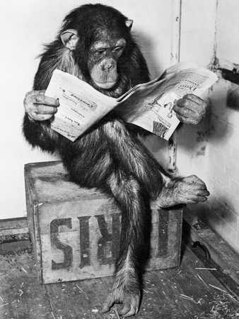 Chimpanzee Reading Newspaper Stretched Canvas Print