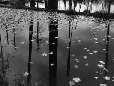 Leaves in Pond, 1956 Stretched Canvas Print