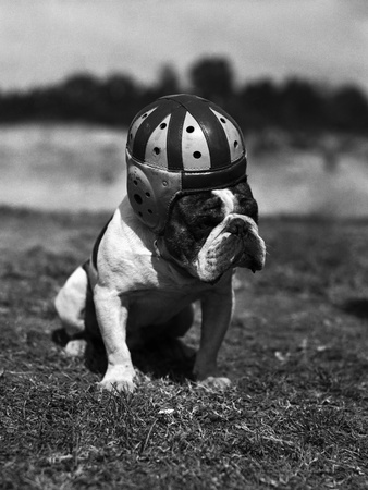 Dog Wearing Helmet on Football Field Stretched Canvas Print