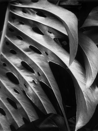 Leaf Composition Stretched Canvas Print