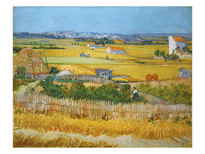 Van Gogh: Wheatfield, 1888 Stretched Canvas Print