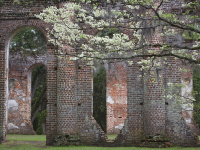 Ruins in the Spring of Old Sheldon Church, South Carolina, Usa Stretched Canvas Print