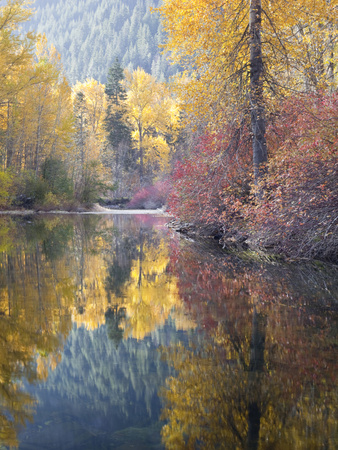 Autumn Color, Whitepine Creek, Wenatchee National Forest, Washington, Usa Stretched Canvas Print