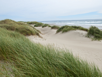 Sand Dunes and Scrub in Oregon Dunes National Recreation Park in Florence, Oregon, Usa Stretched Canvas Print