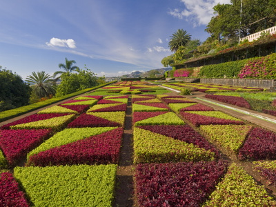 Formal Gardens in the Botanical Gardens (Jardim Botanico), Above Funchal, Madeira, Portugal, Europe Stretched Canvas Print