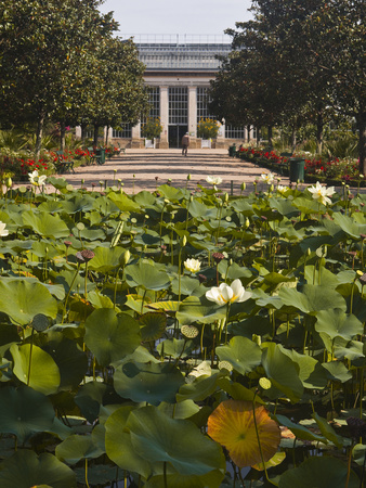 Water Lilies in the Jardins Botanique (Botanical Gardens), Tours, Indre Et Loire, Centre, France, E Stretched Canvas Print