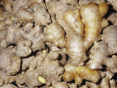 Ginger Aromatic Rhizomes for Use as a Spice or Herb (Zingiber Officinale) Stretched Canvas Print