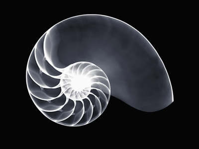X-Ray of a Chambered Nautilus Shell Stretched Canvas Print