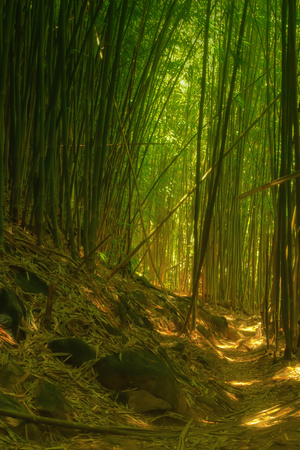 Bamboo Forest, Maui Stretched Canvas Print