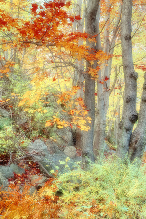 New England Fall Color Impressions Stretched Canvas Print