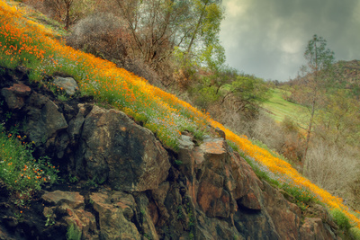 Spring in the Canyon Stretched Canvas Print