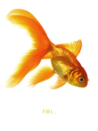 FML Stretched Canvas Print