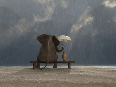 Elephant And Dog Sit Under The Rain Mike_Kiev Photographic Print