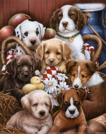 Puppies II Print by Jenny Newland at Art.com