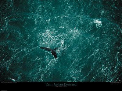 Baleine photo par Yann Arthus-Bertrand