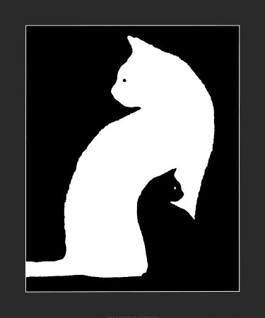 black and white cat pictures. Big White Cat, Small Black