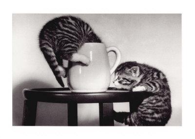 http://cache2.artprintimages.com/p/LRG/8/894/V9OJ000Z/art-print/cat-coffee-cup-twins.jpg