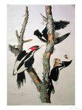 Related Bird Categories