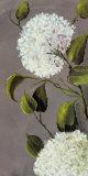 Hortensies