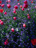 Floral & Botanical Lonely Planet