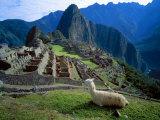 South America (Danita Delimont)