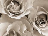 Floral & Botanical (Trigger Images)