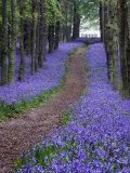 Landscapes (Oxford Scientific)