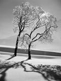 Landscapes (LIFE)