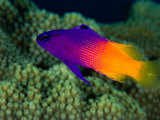 Sea Creatures Lonely Planet