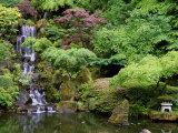 Floral & Botanical (SuperStock Photography)