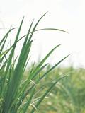 Country Landscapes (Jupiter Images Photography)