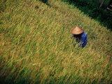 Laotian Culture