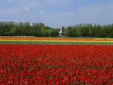 Flowers (Robert Harding Imagery)