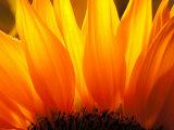 Floral & Botanical (Jon Arnold Images)
