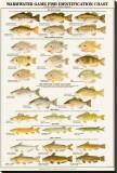 Fish Charts