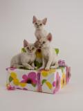 The Cat Fanciers' Association Collection
