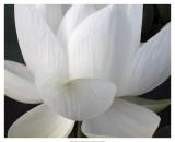 Popular Flowers