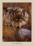 Wild Dogs by Species