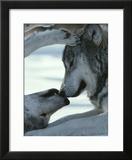Animal Instincts (Framed)