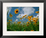 Blooming Botanicals (Framed)