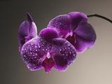 Purple DEMO