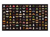 Pachanga Collection