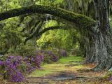 Plantations (Photography)