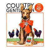 Country Gentleman Covers