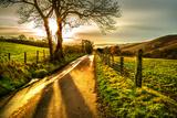 Landscapes (Trigger Images)